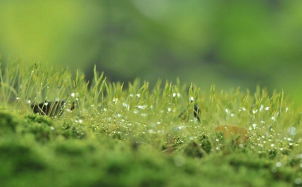 Les engagements écologiques et sociaux vont de pair