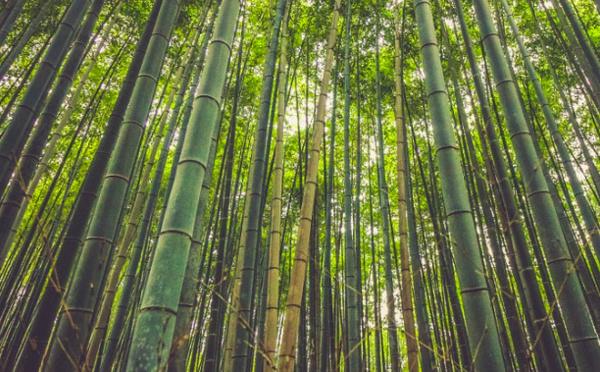 Investir dans l'environnement et le faire savoir : la recette pour être de toute façon gagnant